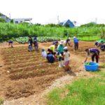あやぱにイモ植え体験 2020/06/26